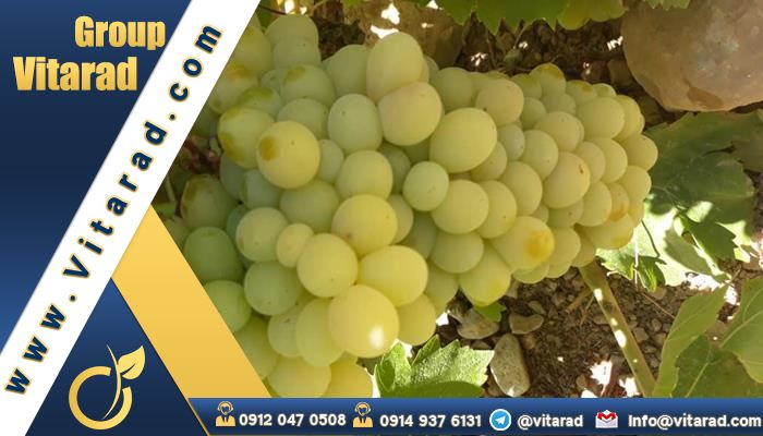 The most important factors affecting the export and import of grapes