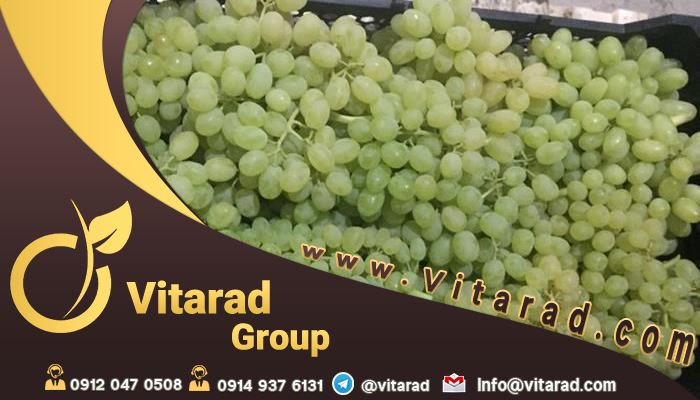import grapes from Iran