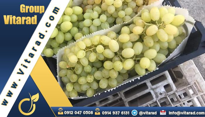 Exporting the best quality grapes to other countries