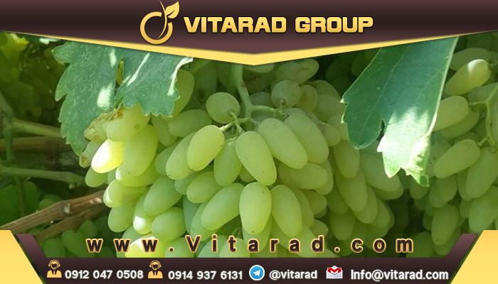 Green and red seedless grapes: