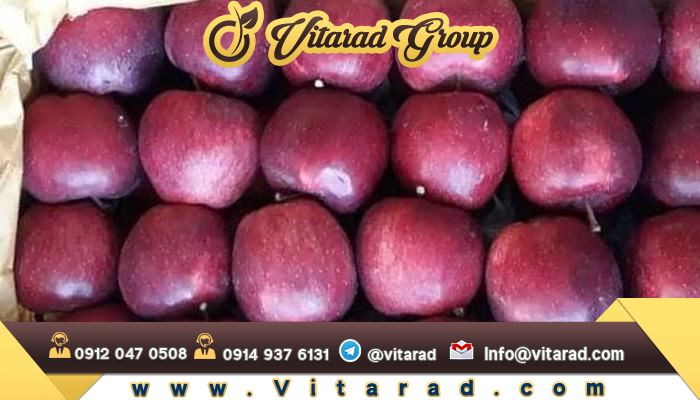 Grading tree apple trees for sale and export: