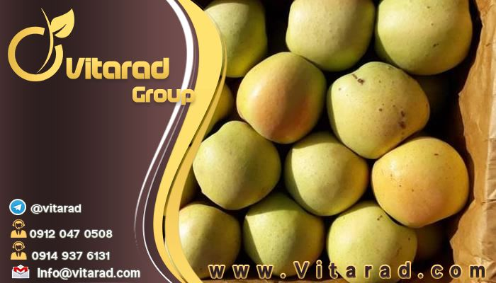 Iranian golden delicious apple tree supplier