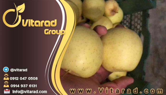 Iranian export apples packing: