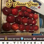 Red delicious apples import to india