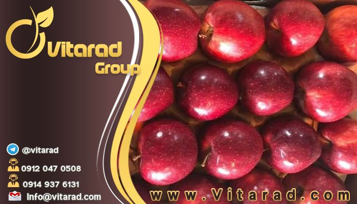 Iranian Red delicious apples Clients: