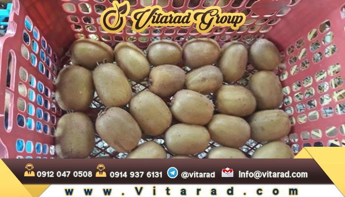 Kiwi fruit supplier iran