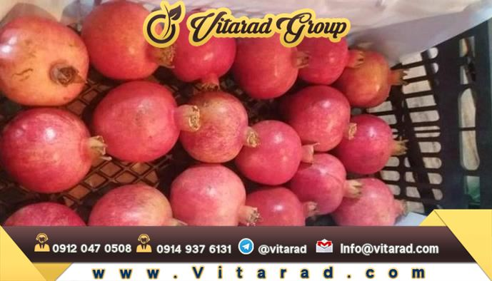 Export price of pomegranate from Iran
