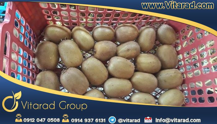 Ways to export kiwi from Bandar Abbas to countries such as India or Russia