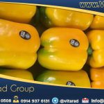 Bell pepper global wholesale market prices