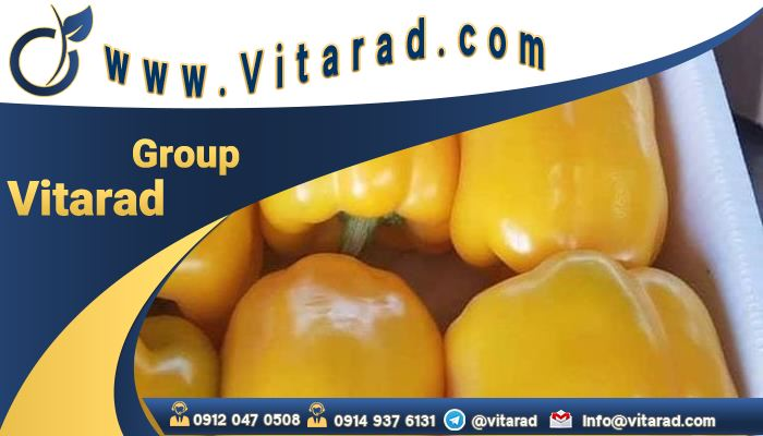 How To Get The Bell pepper global wholesale market prices