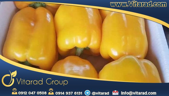 Wholesale buy Iranian bell peppers