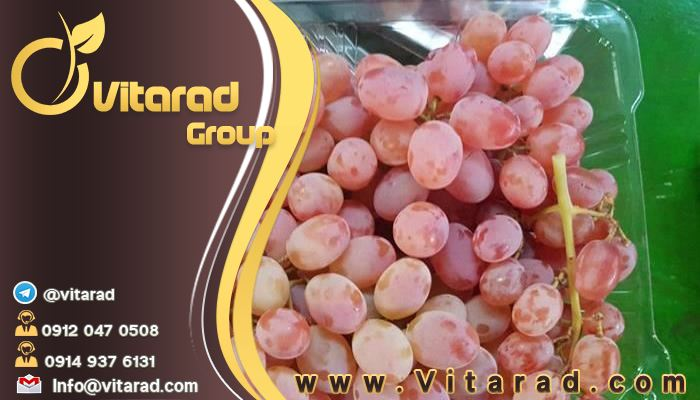 Different types of grapes export companies in Iran