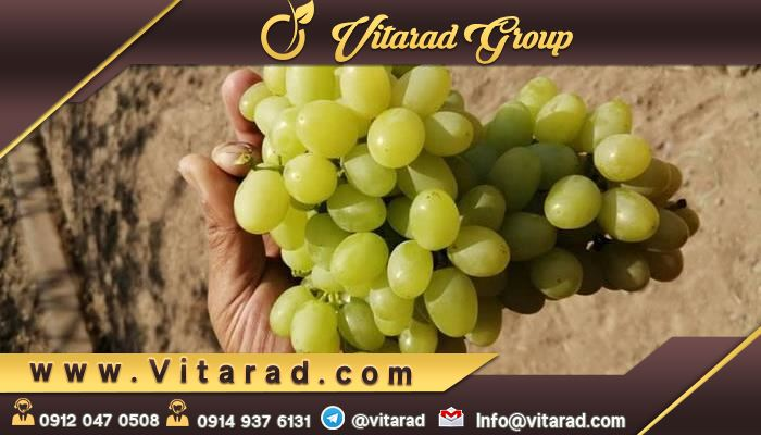 Green grapes buy online