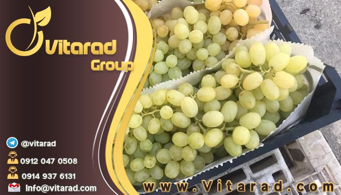 Amazing properties of grapes for humans