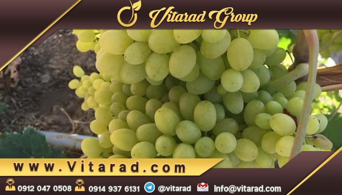 Online shopping for different types of grapes