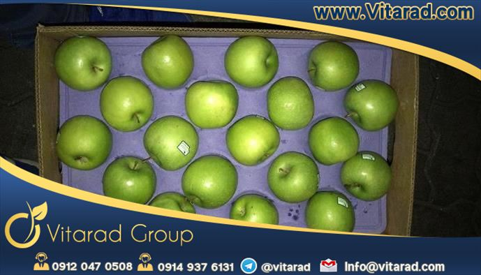 Export apple fruit from Iran