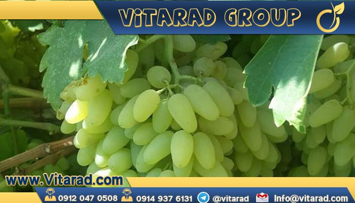 Grapes on sale this week