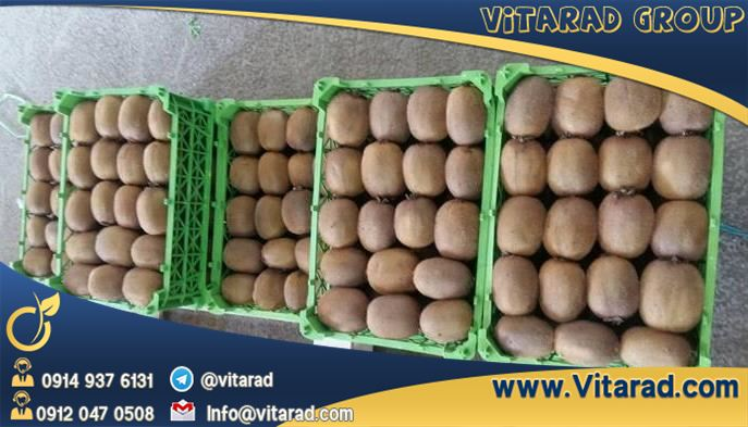 Kiwifruit export from Iran