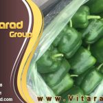Best quality bell pepper for export