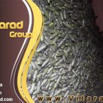 Export cucumber from requirement