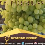 Sale seedless and green grapes
