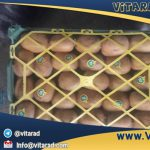 Wholesale organic farm price fresh kiwi fruit